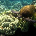turtle buddy