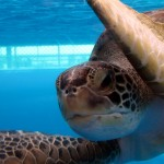 Sea Turtle Close Up