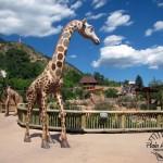Giraffe Area