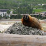 23 Marmot at Observation Point