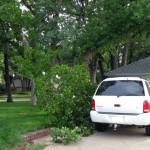 Tree Near Car 5