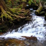 Grotto Falls Crossing Creek Watermark