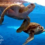 Texas State Aquarium: Corpus Christi