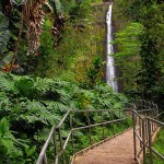 Akaka Falls State Park – Big Island