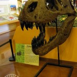 Rocky Mountain Dinosaur Resource Center: Woodland Park