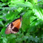Butterfly Pavilion- Westminster Colorado