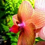 Hawaii Tropical Botanical Garden: Big Island