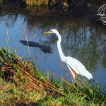 Anhinga Trail: Everglades National Park