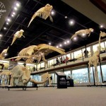 Museum of Osteology: Dig Them Bones