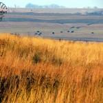 Neal Smith Wildlife Refuge – Iowa