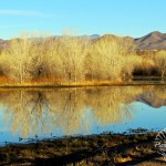 Bosque del Apache National Wildlife Refuge – New Mexico