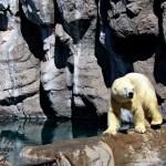 Rio Grande Zoo – Albuquerque