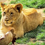 Reid Park Zoo – Tucson