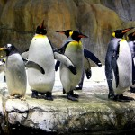 Henry Doorly Zoo: Like Taking a Trip around the World without leaving Omaha