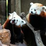 Great Plains Zoo & Delbridge Museum of Natural History