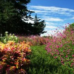 Ted Ensley Gardens: Take in the Beauty of Nature