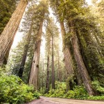Made our Bucket List: Redwood National and State Parks
