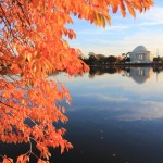 Washington-DC-Jefferson-Memorial-Fall