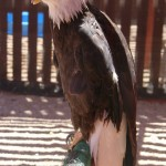 Nature and Raptor Center: Pueblo Fun