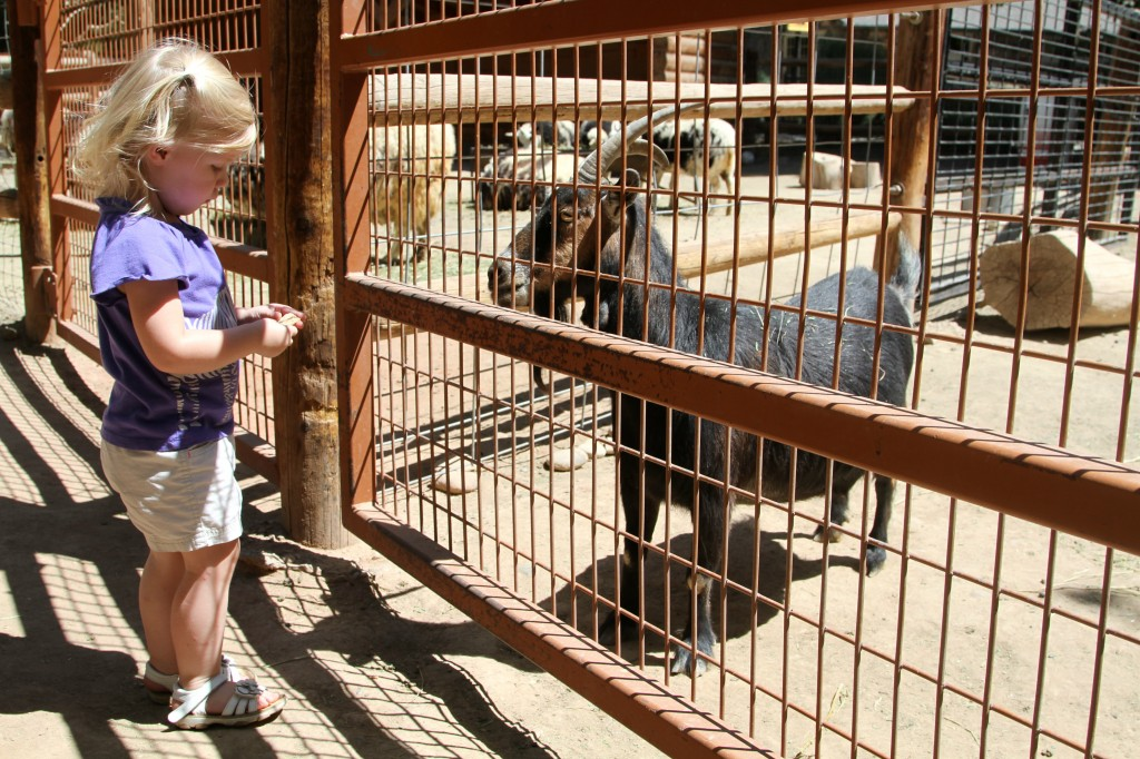 M and Goat 1024x682 Pueblo Zoo: Small Zoo Big Heart