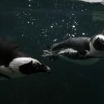 Pueblo Zoo: Small Zoo Big Heart
