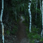 Montville Nature Trail: Great Sand Dunes National Park