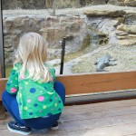 Frank Buck Zoo: Good Stop for our Little One
