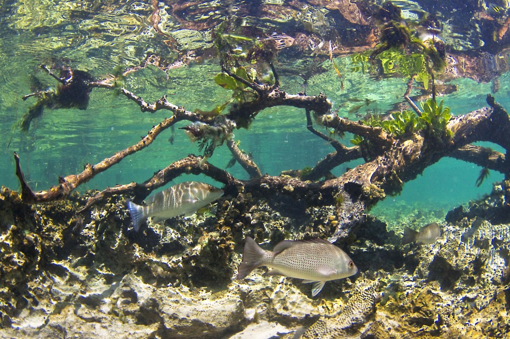 Sands Key Mangrove 1024x682 Top 10 Things to do or see in Biscayne National Park