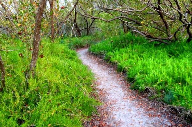 Spite Highway Trail Top 10 Things to do or see in Biscayne National Park