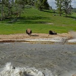Mud Volcano: Yellowstone National Park