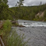 Lehardy Rapids: Yellowstone National Park