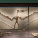 Natural History Museum: KU