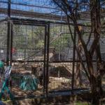 Austin Zoo – Texas